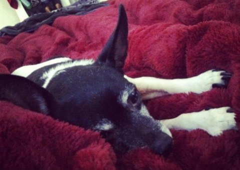 Older dogs spend more time napping: Most dogs sleep 12 - 14 hours a day on average