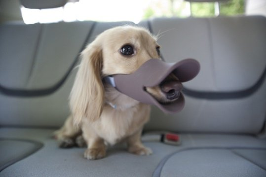 Oppo Dog Muzzle in brown