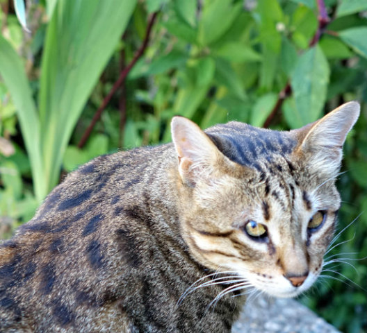 Cats with Access to Plants: Indoor & outdoor plants can make pets sick