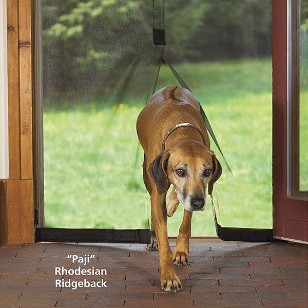 Youve Never Had A Pet Door Like This The Dog Screen Door
