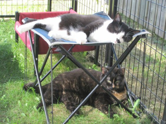 Cat Patio in use (Photo by dawnwastaken/2013. Used by permission)