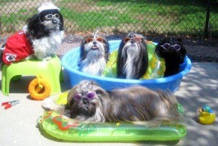 Dogs Enjoying pool
