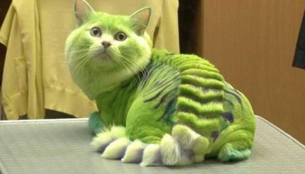 Green Dragon Cat