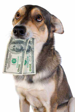 Pets are not born with $100 bills in their jaws: image via petgather.com