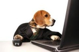 Let's see how this pet health insurance policy reads....: image via insuranceproviders.com/