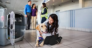 PetSafe flight program for pets by United Airlines