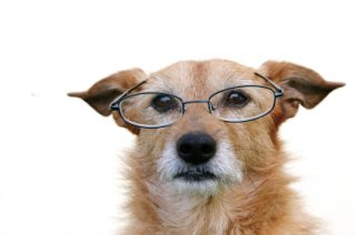 Elderly dogs may one day be able to read again: image via texasdogsandcats.com