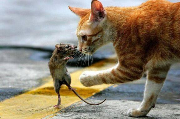 Cat and Mouse Encounter (Image via Green Renaissance)