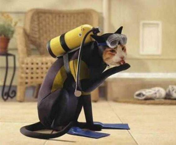 Scuba Cat (Image via PrimeScuba)