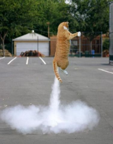 Rocket Cat (Image via Pinterest)