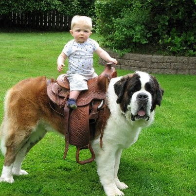 Toddler Riding a St. Bernard (Image via Pinterest)