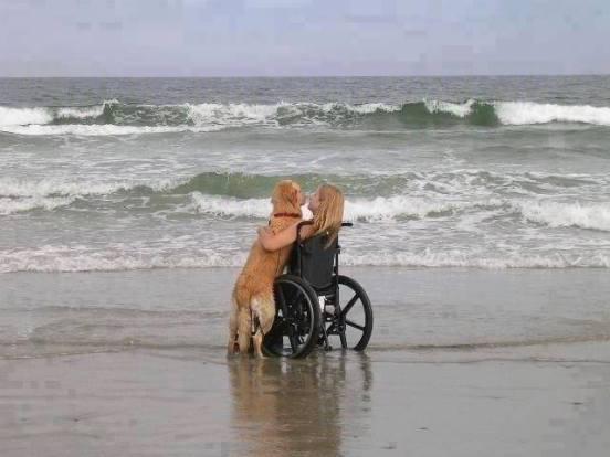 Dog and Human at theBeach (Image via Green Renaissance)
