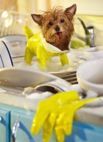 Yorkie in a Wet Suit (Image via Pinterest)