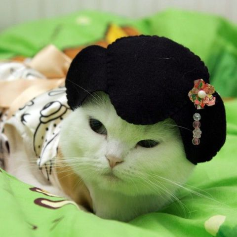 Geisha Cat (Image via Pinterest)