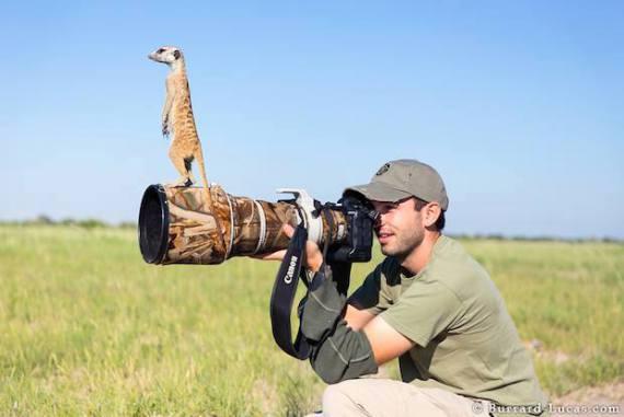The Meerkat and the Photographer (Image via Burrard-Lucas)