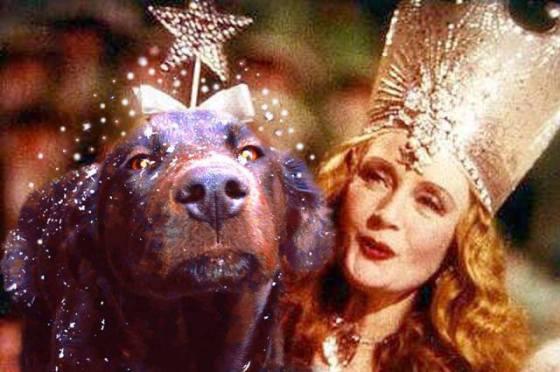 Wizard of Dogs (Image via Green Renaissance)