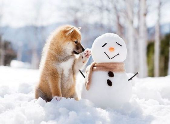 Dog and Snowman (Image via Pinterest)