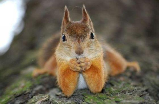 Cute Squirrel (Image via Pinterest)