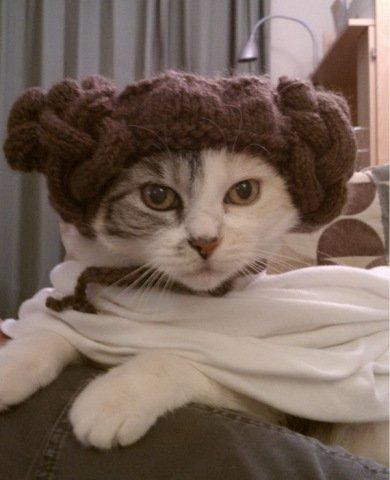 Princess Leia Cat (Image via Mommy Has A Potty Mouth)