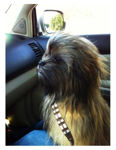 Chewbacca Dog (Image via Mommy has a Potty Mouth)