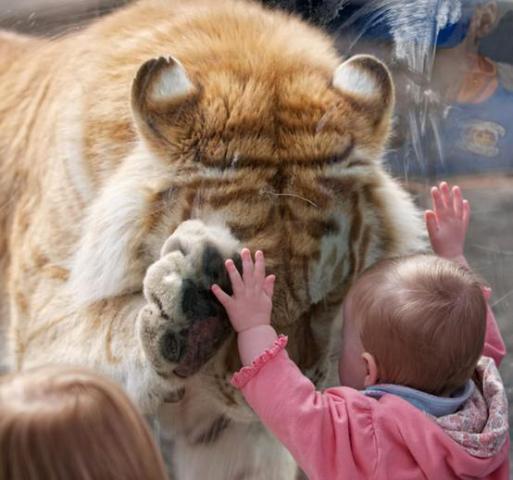 Tiger and Tot (Image via Facebook)