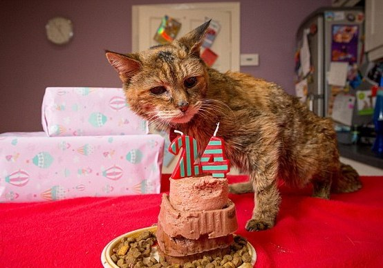 Poppy, the World's Oldest Cat (You Tube Image)