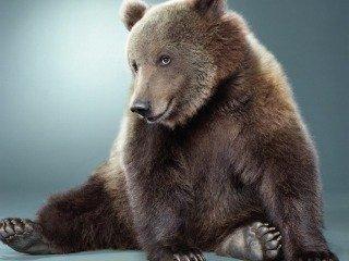 Posing Brown Bear