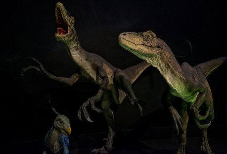 Raptors: (Photo by pin9aroo /Creative Commons via Flickr)