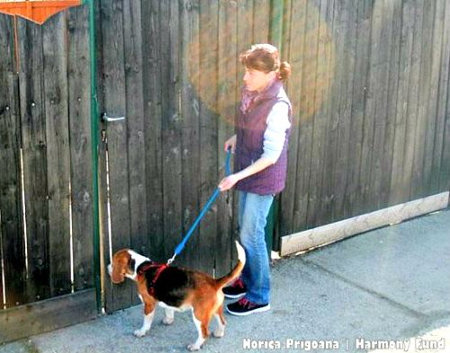 rescue dogs, animal cruelty, romania, animal shelters, beagles