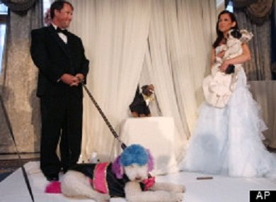 Chilly Pasternak (left) and Baby Hope Diamond marry in the most expensive pet wedding ever!: AP image via huffingtonpost.com