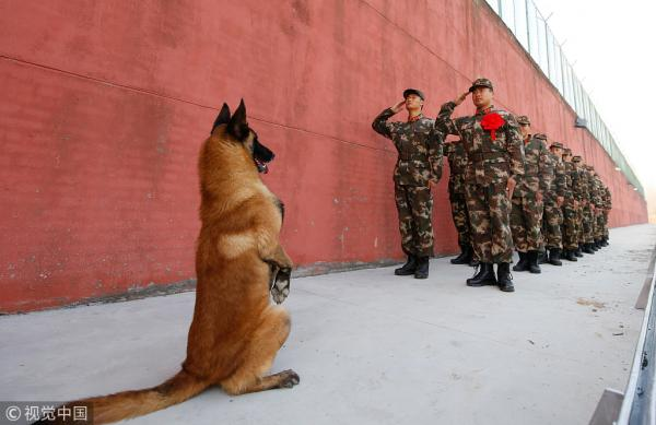Chinese Army Dog Salutes Soldiers Going Off Duty