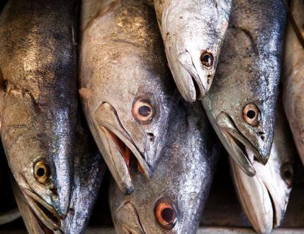 Sea Bass (Photo by Tomascastelazo/Creative Commons via Wikimedia)