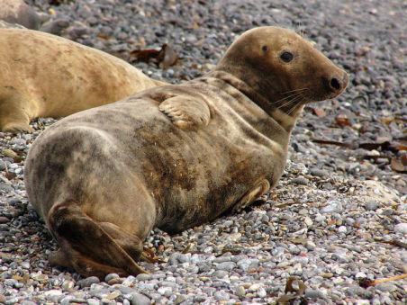 Seal Pup (Photo by Andreas Trepte/Creative Commons via Wikimedia)