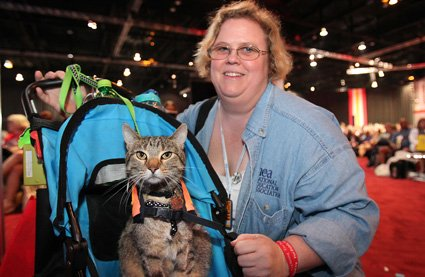 Vest In Show: The Top 5 Service Cats