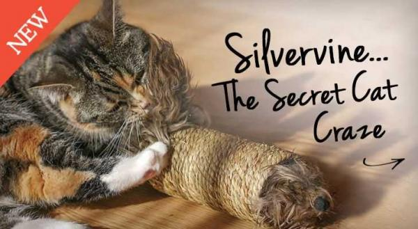Cats Who Can't Stand Catnip Crave Smack Silverine