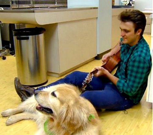 Colorado veterinarian sings to dogs before surgery