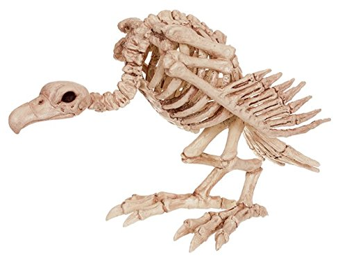 Vulture Skeleton