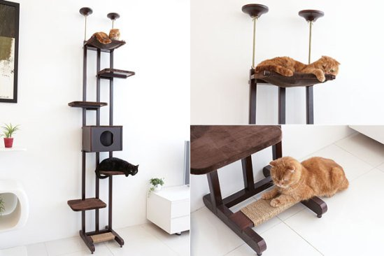 Sky Climber Cat Ladder: image via vetstreet.com