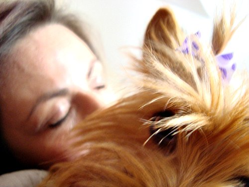 Sleeping With Pets: Is There Really Anything Wrong With It?: Statistically, 50% of dogs sleep with their owners