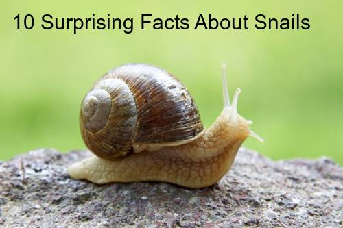 10 Surprising Things You Probably Don T Know About Snails Petslady Com