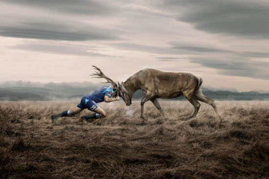 Stag Art by Brown: Here is some animal action you don't see every day!