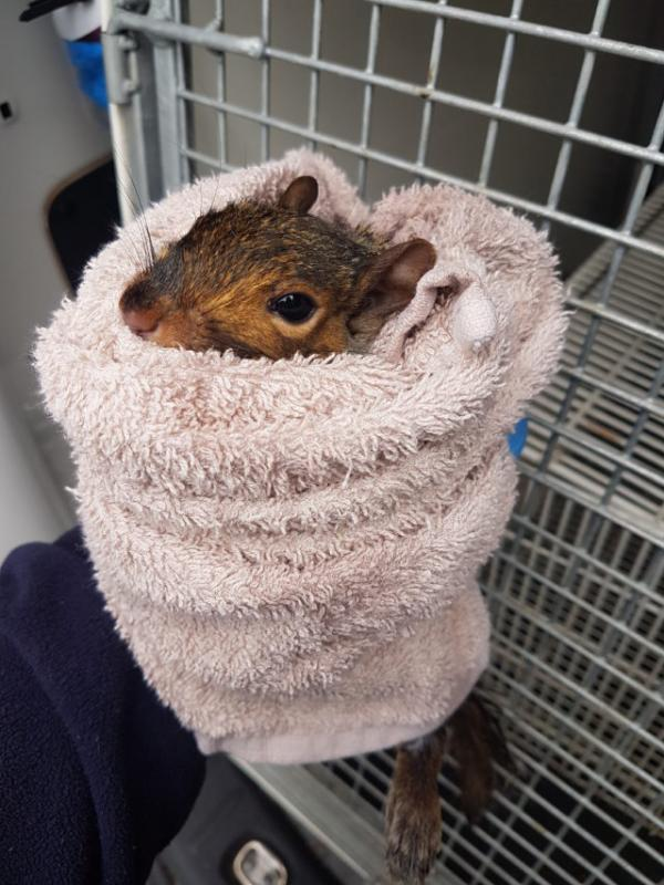 Pooped Squirrel Rescued From Student's Toilet