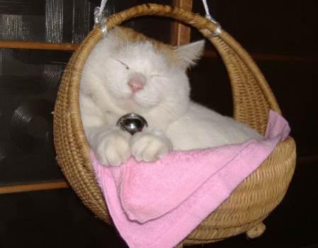 Shironeko: Cat Or Doll