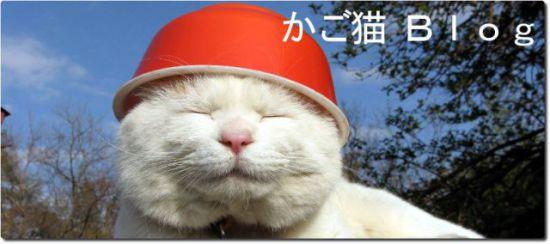 Shironeko wears bowls and writes blogs: image via kagonekoshiro.blog86.fc2.com