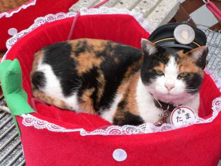 Tama, the Stationmaster in Repose (Photo by Takobou/Creative Commons via Wikimedia)