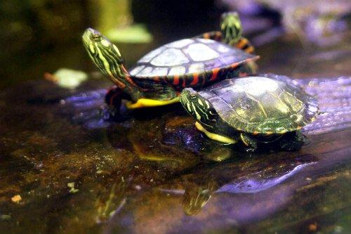Starter Pets for Kids: Terrarium pets like turtles, lizards & hermit crabs