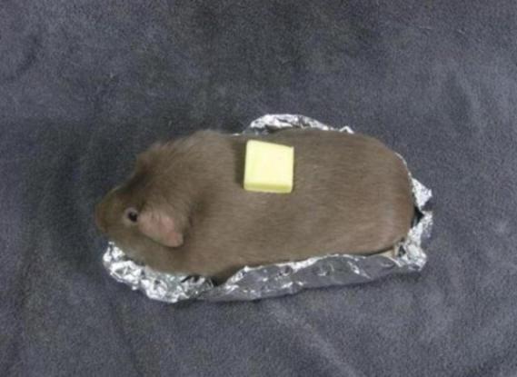 Guinea Pig Baked Potato (Image via The Poke)
