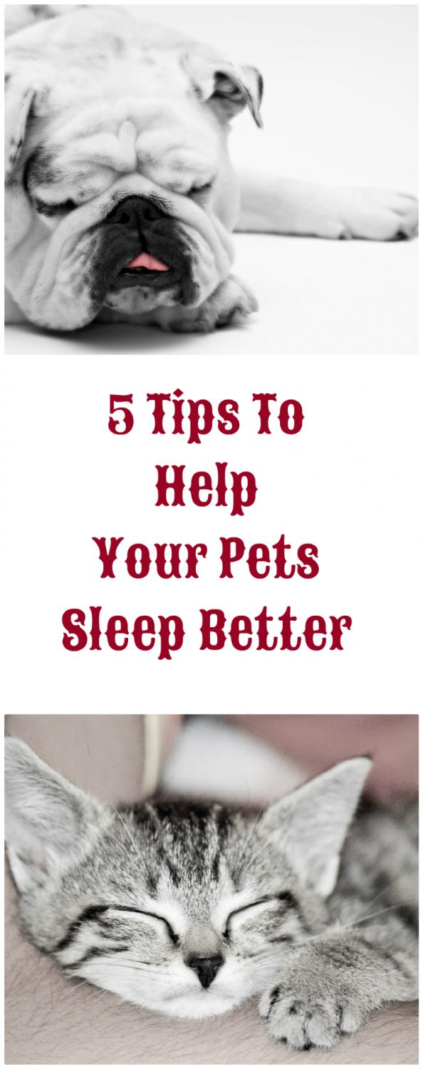 Tips To Help Dogs Sleep Better