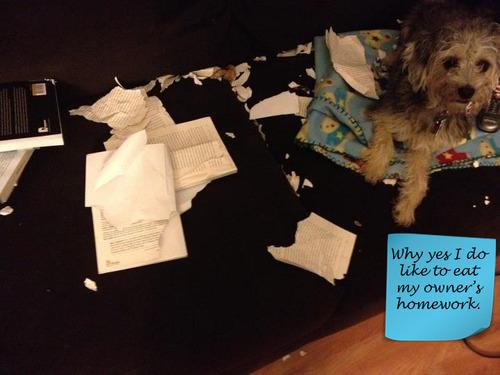 Shamed Dog, the homework eater: image via dog-shaming.com/
