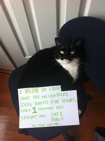 Cat Shaming, 'Ha ha ha. Listen to that stupid dog!': image via catshaming.tumblr.com